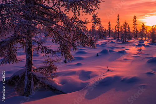 Foto op Plexiglas Aubergine Winter landscape with forest, cloudy sky and sun