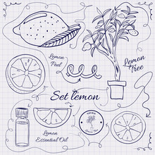 A Large Collection Of Stand-alone Sketch Lemons For Design On A Sheet Of Paper Into The Cage. Illustration