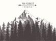 Fir forest mountain drawn vector illustration