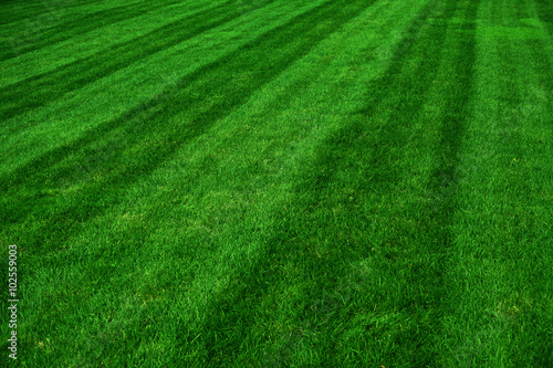 Foto op Plexiglas Groene green grass field after mowing
