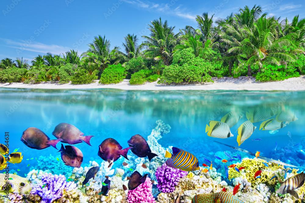 Fototapeta Tropical island and the underwater world in the Maldives. Thoddo