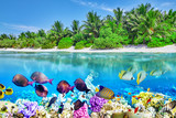 Tropical island and the underwater world in the Maldives. Thoddo