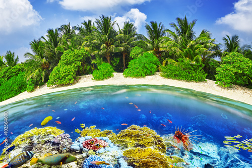 Foto op Plexiglas Groene Tropical island and the underwater world in the Maldives. Thoddo