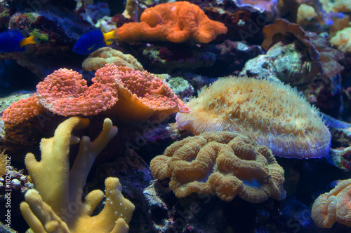 Papiers peints Sous-marin Fragment of colorful coral reef