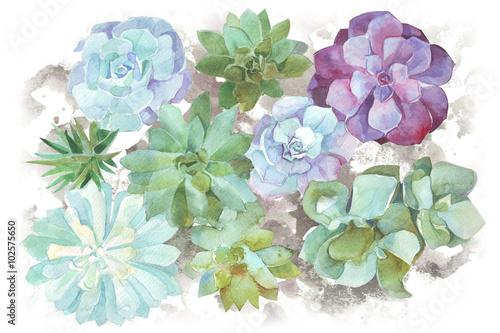 sukulenty kwiaty akwarela