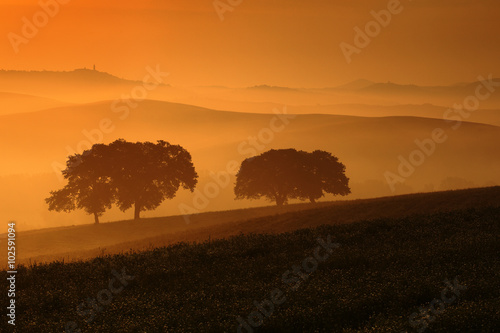 Deurstickers Toscane Morning in the fields, Pienza in background, Tuscany, Italy