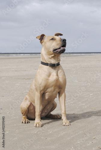 Poster Dog Hond zit op strand in de zon