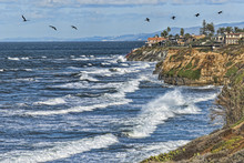 Seabirds Near Carlsbad Cliffs....