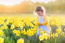 Little Girl In Daffodil Field
