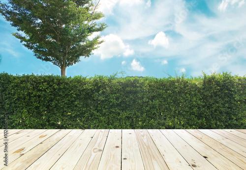 Papiers peints Jardin Grown tree wall and ornamental shrub