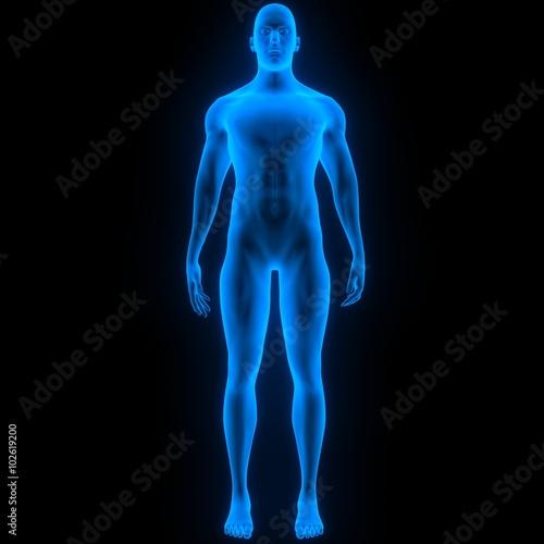 Fotografía  Human Male Muscle Body