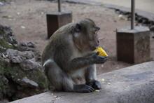Monkeys, Year 2015