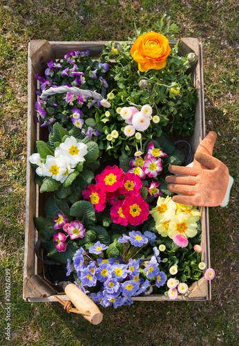 Photo  Gartenarbeit im Frühling