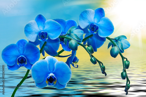 kwiat-orchidei-w-ujeciu-makro