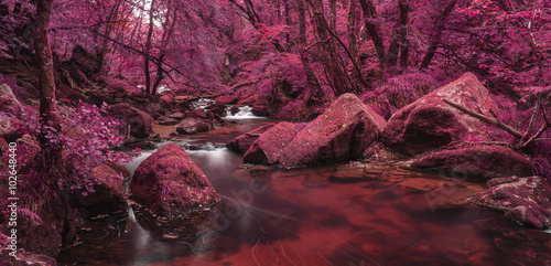 Tuinposter Crimson Beautiful landscape of surreal alternate colored landscape throu