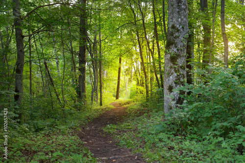 Canvas Prints Road in forest Footpath in a deciduous forest