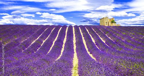 Foto op Aluminium Snoeien blooming violet feelds of lavander in Provance, France