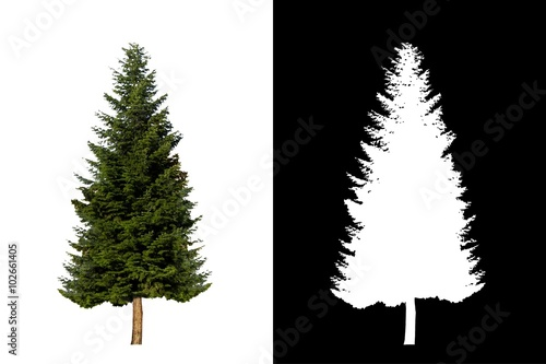 Decorative evergreen tree 3. Decorative evergreen plant on white background with alpha channel mask