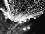 Dandelion ziarna z wodą opuszczają na naturalnym tle - 102685052