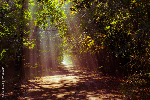 Spoed Foto op Canvas Weg in bos magiczny las