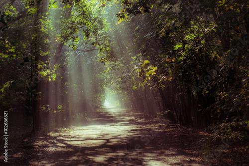 Spoed Foto op Canvas Weg in bos misty forest