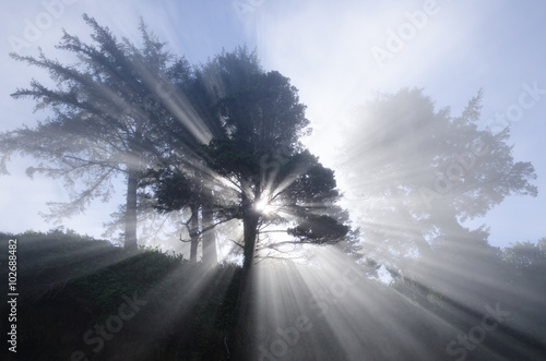 Valokuva  Spirit Tree / Astonishing light peeks through a tree on the coast