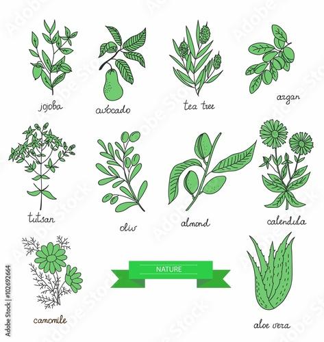Fotografie, Obraz  plants collection