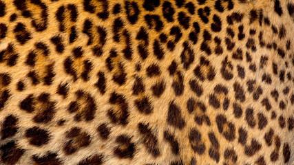 Fototapeta Real jaguar skin