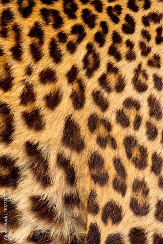 Deurstickers Luipaard Real jaguar skin