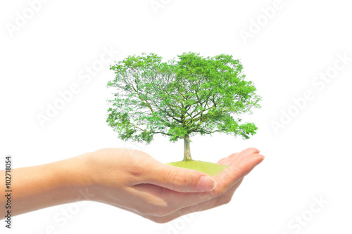 Foto  手の上の樹木