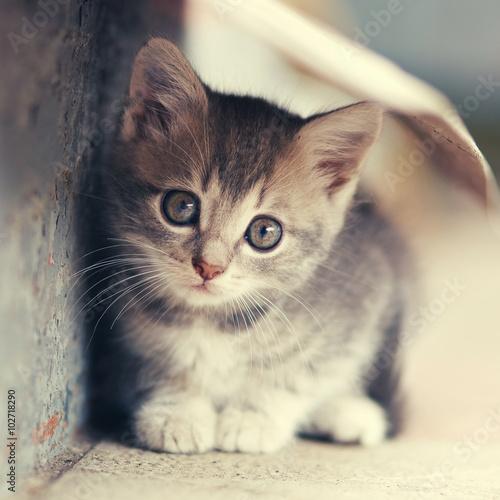 Fototapety, obrazy: little cute kitten  siting  outdoors