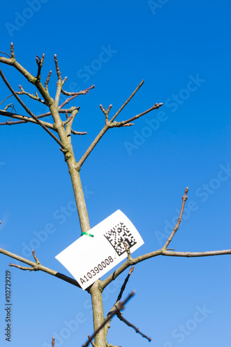 Photo  Label with qr code for census of street trees