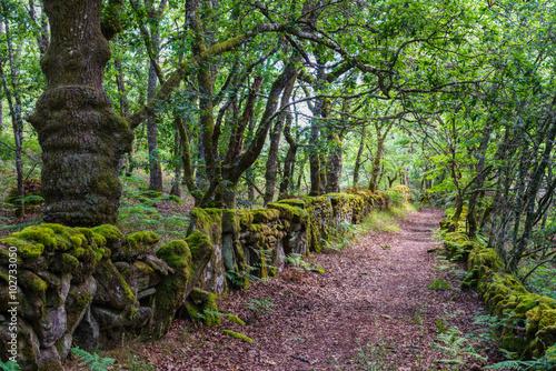 Foto op Canvas Weg in bos Corredoira