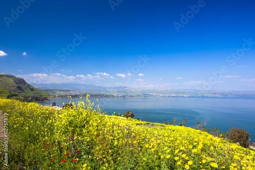 Valokuva Yelloy flowers near sea of Galilee in sunny spring day