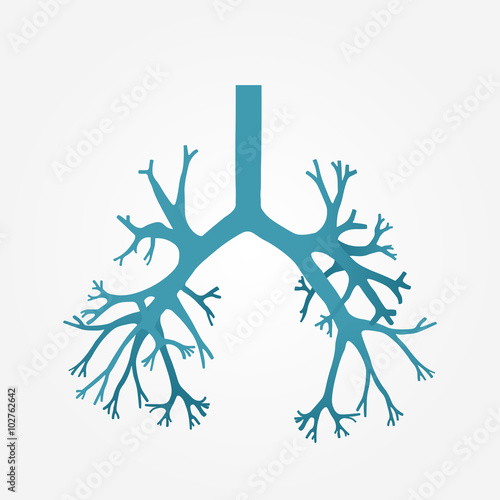Vászonkép Human bronchus in vector