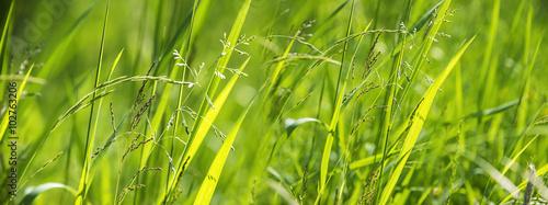 flowering grass in detail - 102763206