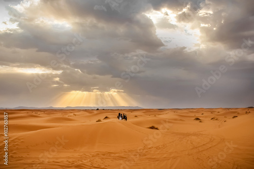 Cadres-photo bureau Maroc People on camels in the Sahara desert at sunset background