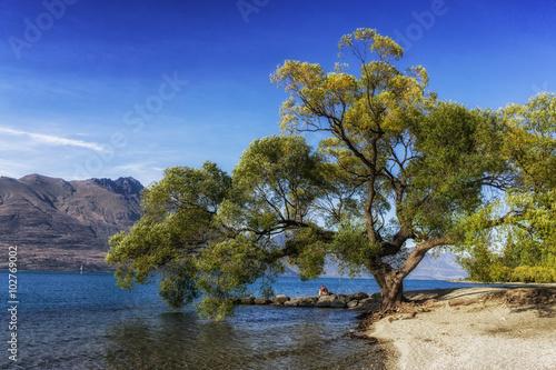 In de dag Bomen tree by lake wakatipu