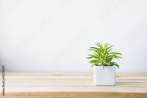 Tuinposter Planten Indoor plant on wooden table and white wall