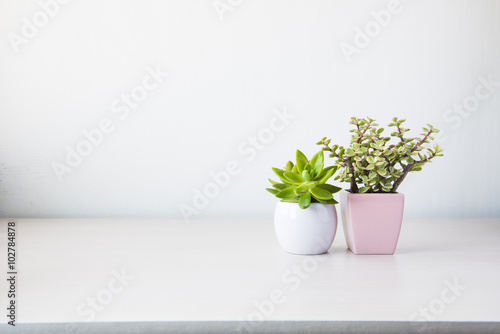 Poster Vegetal Indoor plant on wooden table and white wall
