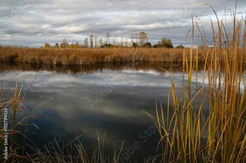 Fotografía  Laguna con espadañas en otoño.