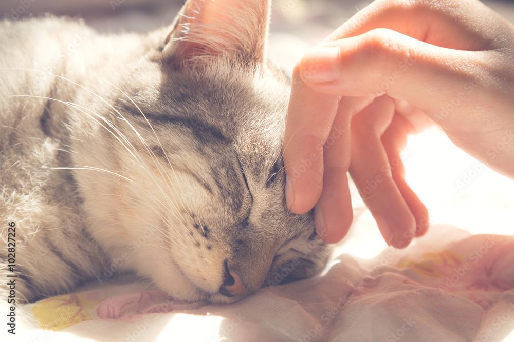 Obraz woman hand petting a cat head, love to animals, vintage photo fototapeta, plakat
