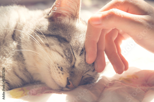 Keuken foto achterwand Kat woman hand petting a cat head, love to animals, vintage photo