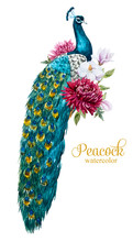 Watercolor Peacock With Flowers