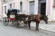 Cuba, Cardenas, horse with Coach