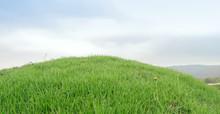 Green Grassy Knoll / Green Gra...