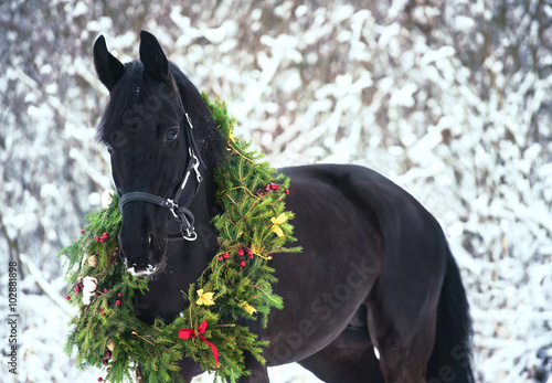 Photo  Christmas portrait of black beautiful horse