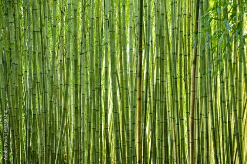 Foto op Plexiglas Bamboe Lush green bamboo