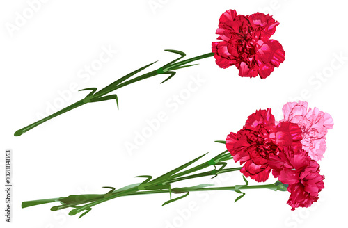 Photo  Red clove. Bouquet of carnations. Set carnation flowers