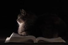 Cat Sleeping On An Open Book. ...